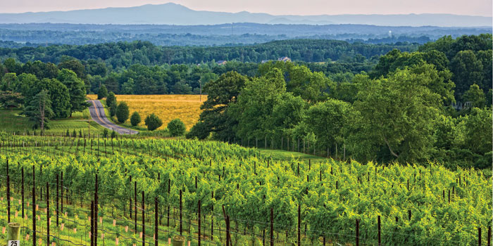 Raffaldini-Vineyards-in-Yadkin-Valley