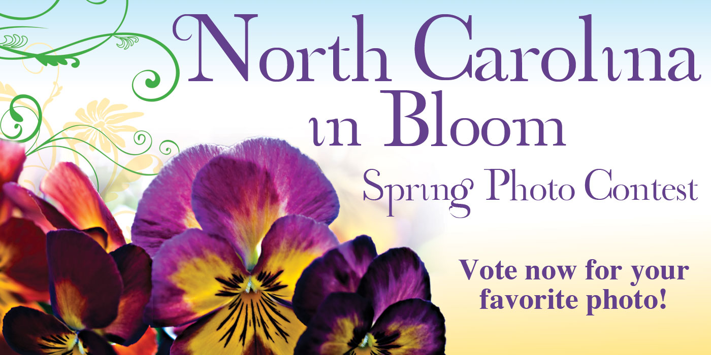 Spring-Photo-Contest-2012-vote-now