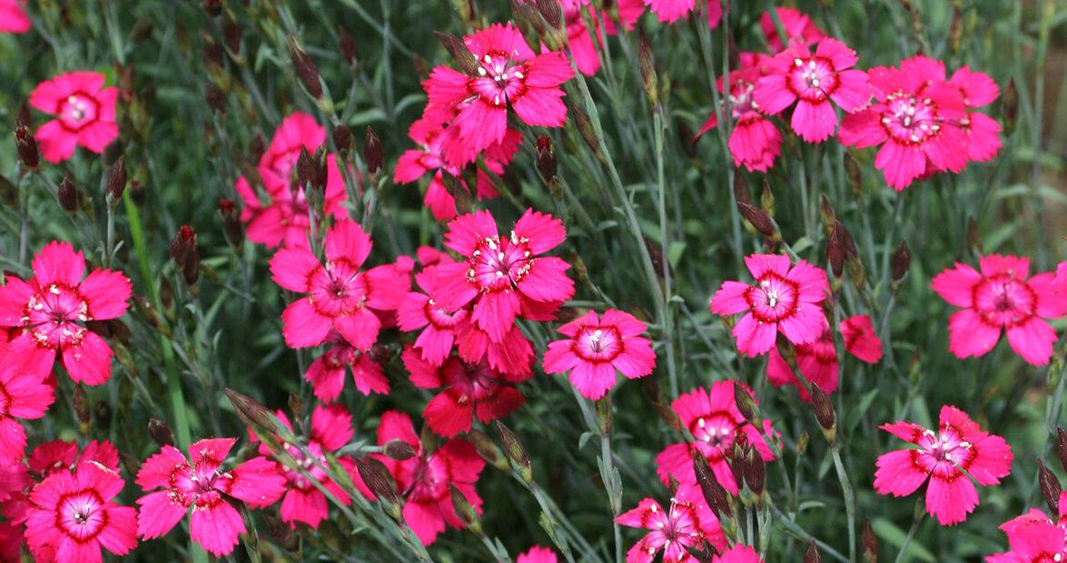 Tips for August Gardening