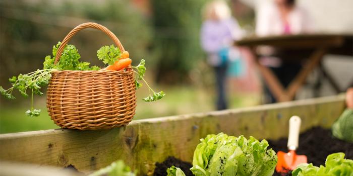 vege garden 700 web