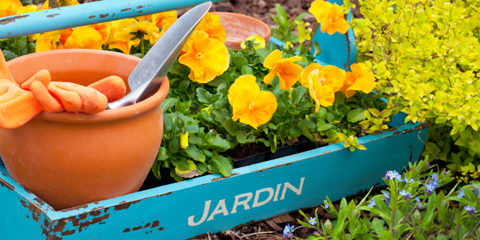 perennials in garden box