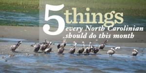 5 Things May 2013