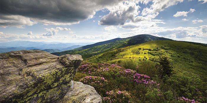 Appalachian Landscape Roan Mountain Highlands Rhododendron Flowe