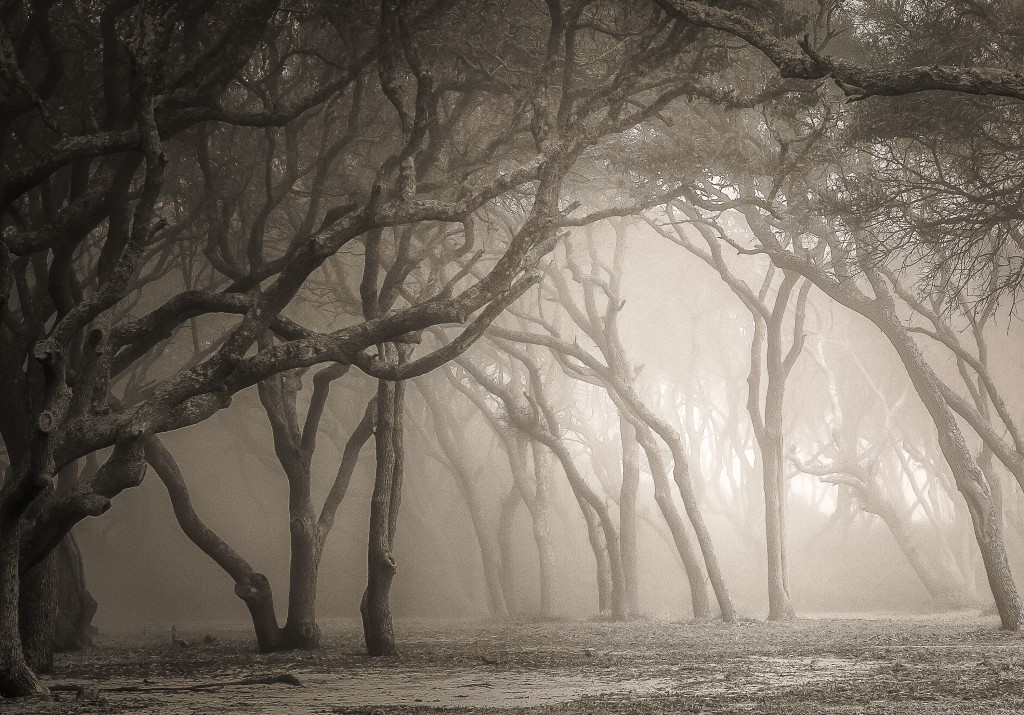 Ghost Trees of Fort Fisher. By Vicki Kohler.