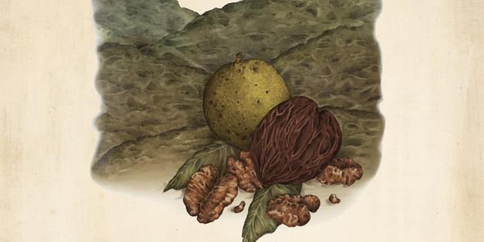 Black Walnut Pound Cake with Old-Fashioned Penuche ...