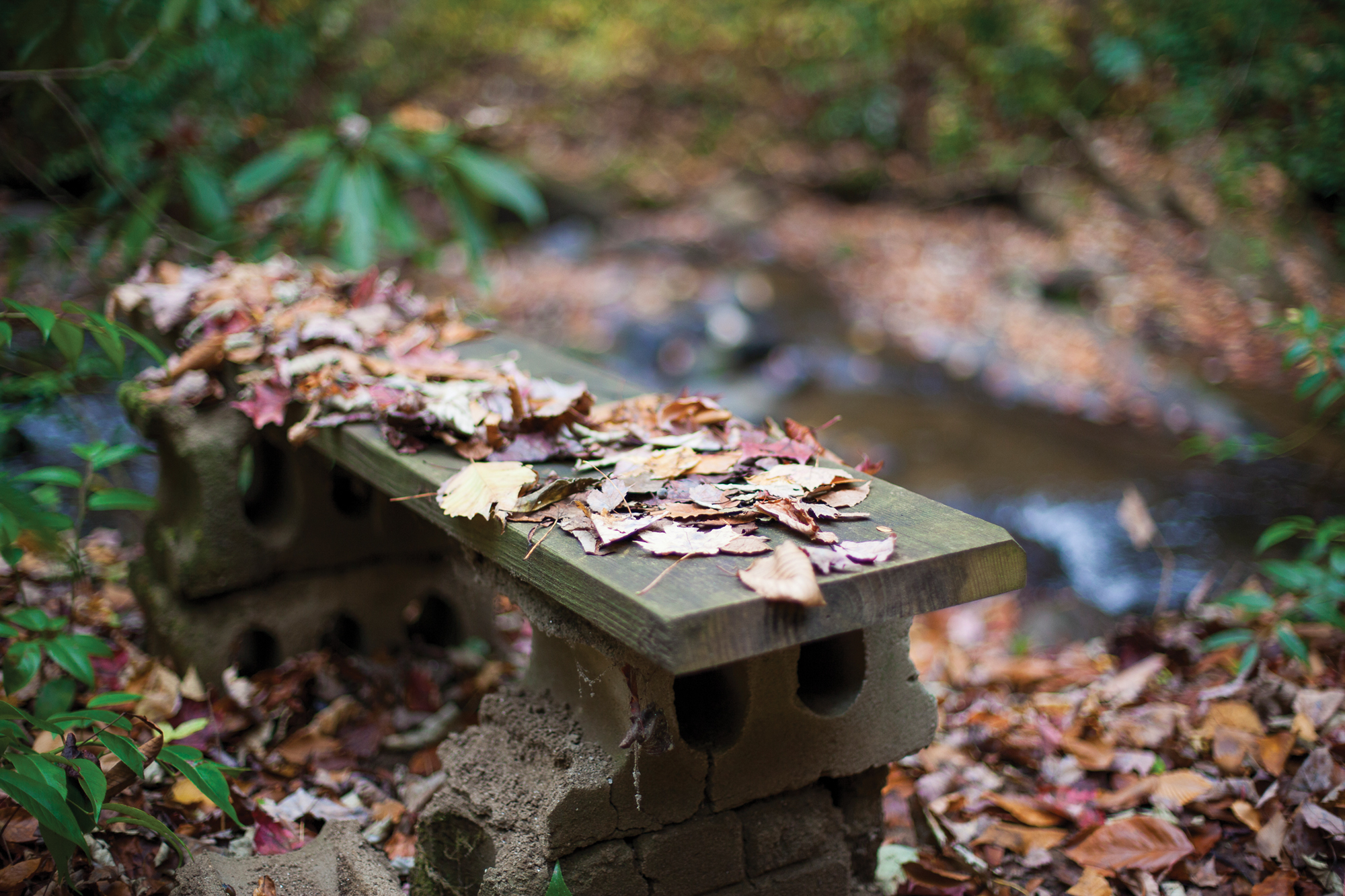 Ellison's walks often take him to the place where he composes his poems, a spot by the creek with a wood-and-cinder-block bench he set up 15 years ago.