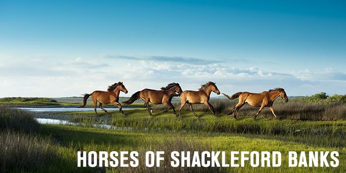 Horses-Final