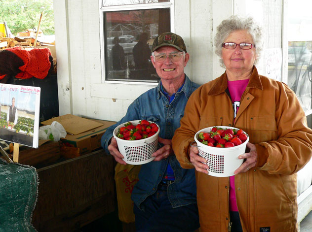 "Here, Helen and William Wise, proudly display buckets of fresh ripe strawberries available at their booth. Helen told me they had been selling strawberries at market since October of last year from the ""tunnel"" type greenhouses they're grown in. I was eager to turn one of these buckets of berries into some sweet strawberry syrup. Be sure to visit the Wise Farms booth when you shop the farmer's market and online at www.wise-farms.com. They're just one of many farmers that sell throughout the year at the Raleigh Farmers Market. Ask them to show you the pictures of the family while you're there."