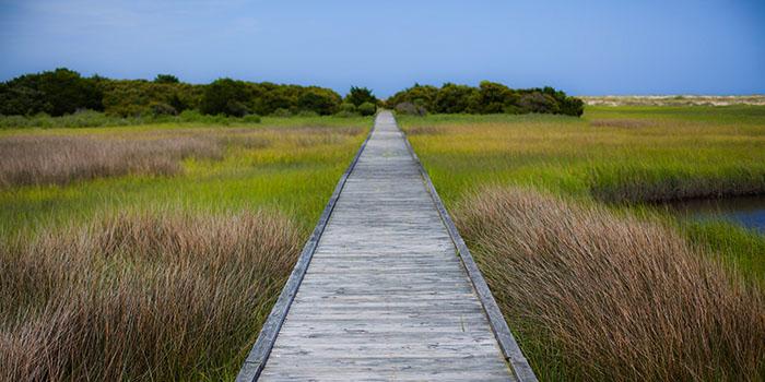 coastal strolls feature image
