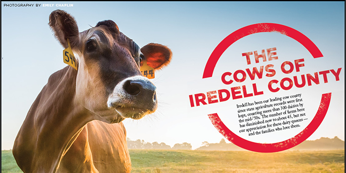 cows feature image