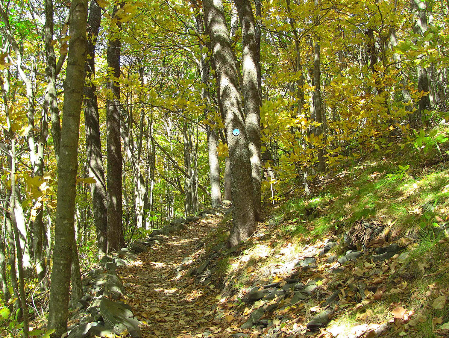 elk knob summit trail