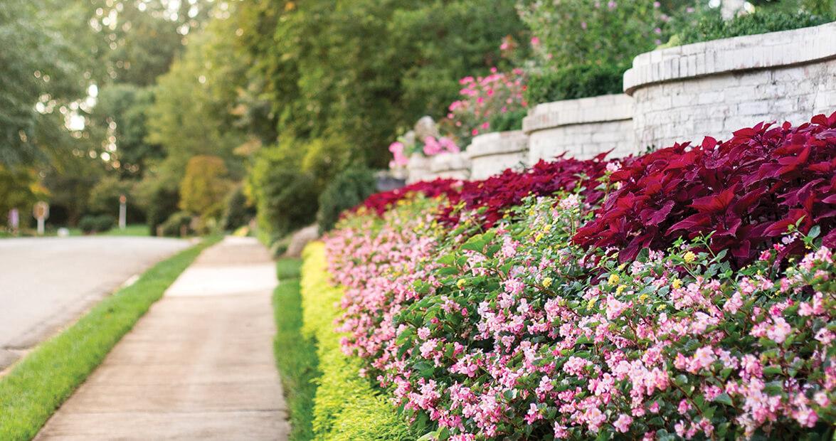 greensboro flowers