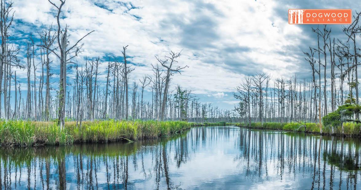 Carolina Wetlands