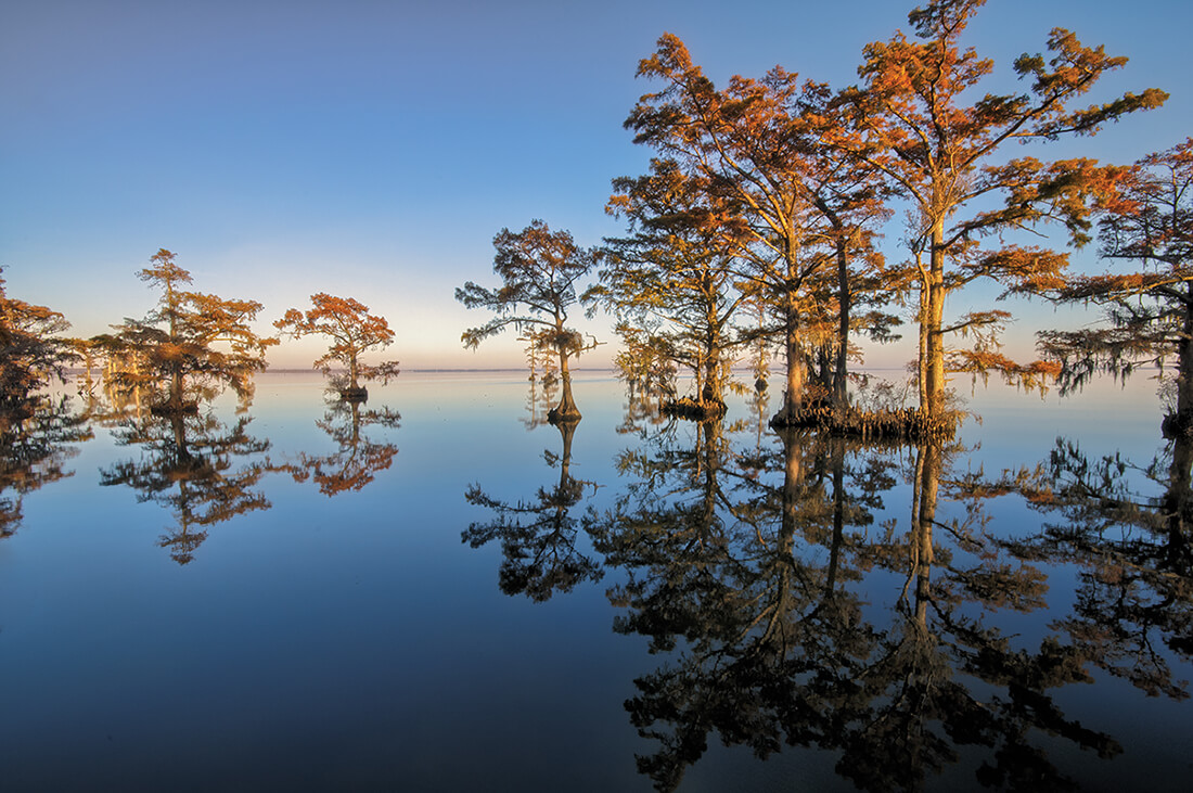 albemarle sound cypress