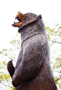 lenoir-rhyne bear