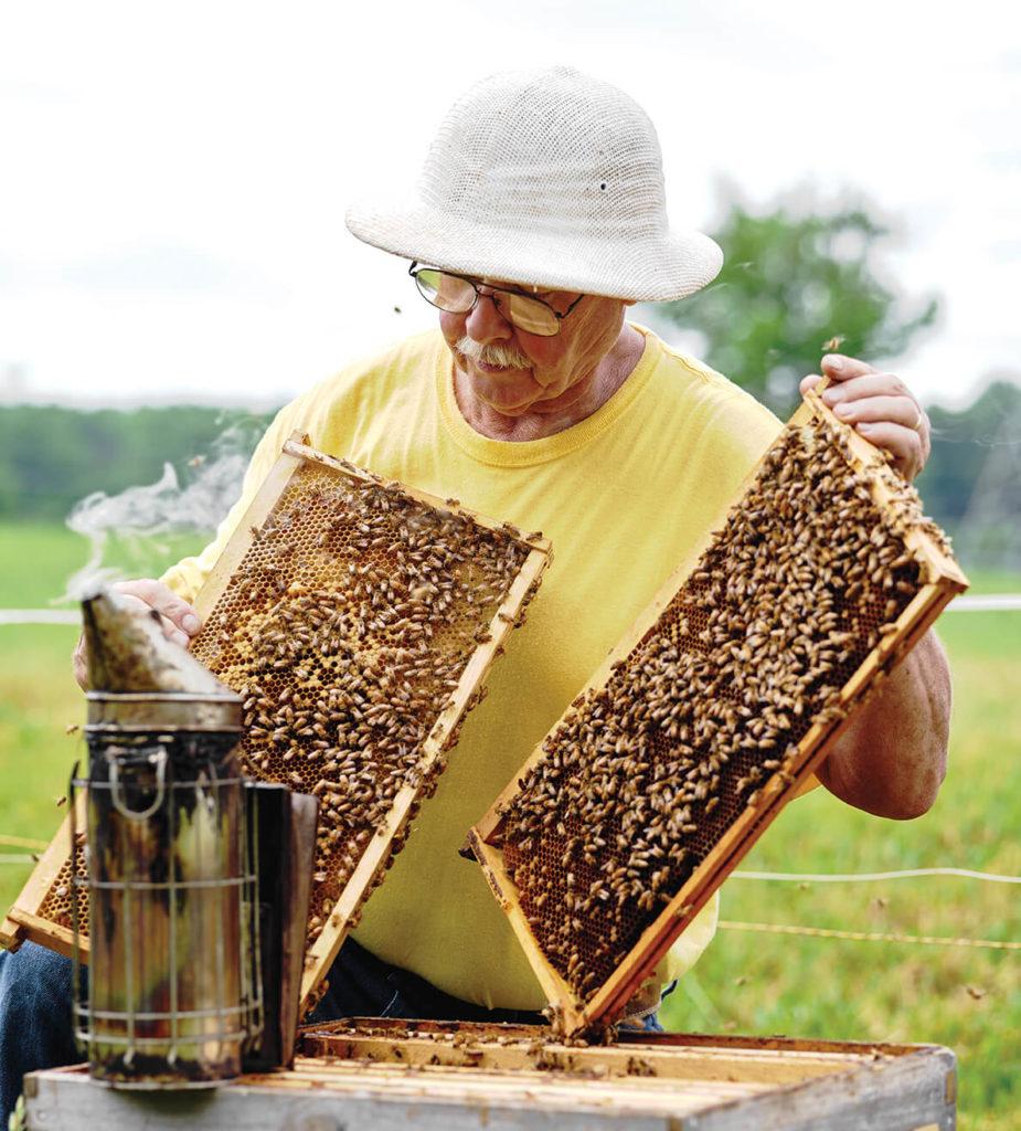chuck norton beekeeper