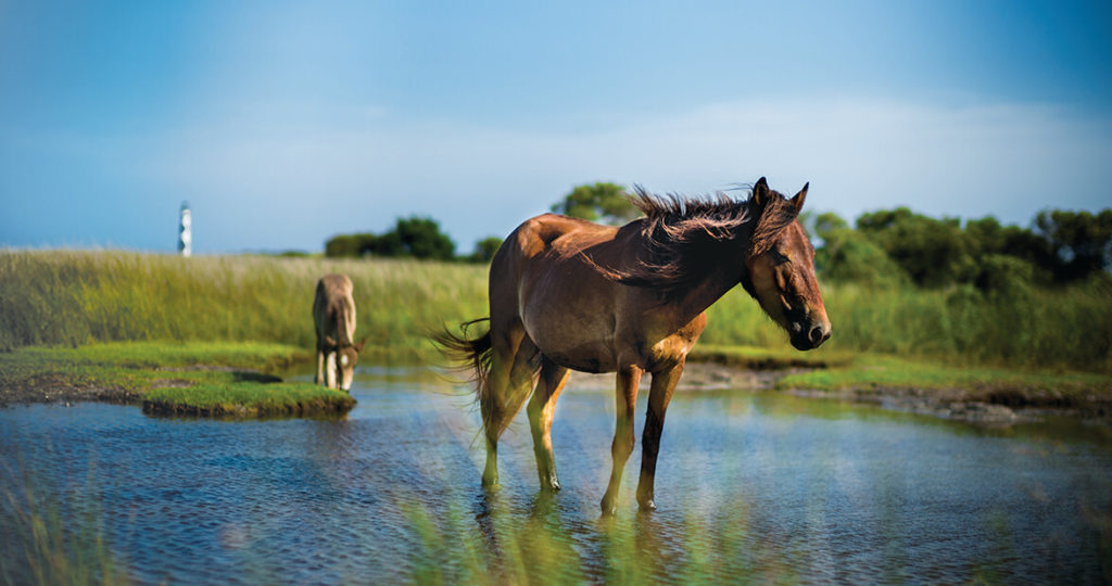 How One Woman Saved the Wild Horses of Shackleford Banks