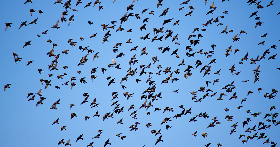 The Halifax County Bird Invasion of 1969