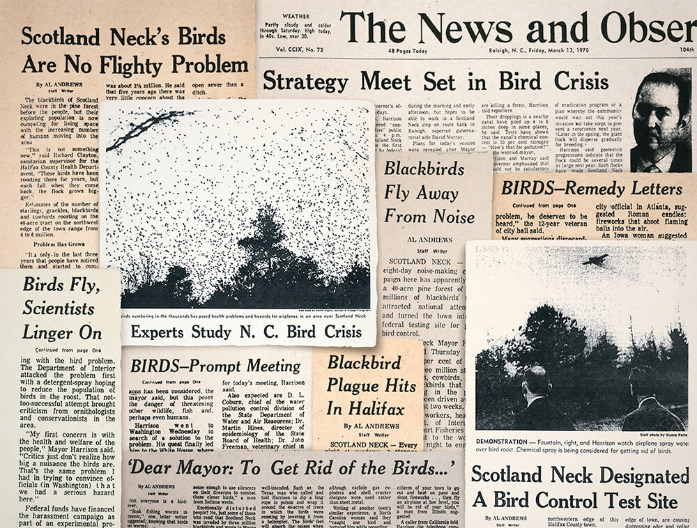 The Halifax County Bird Invasion of 1969