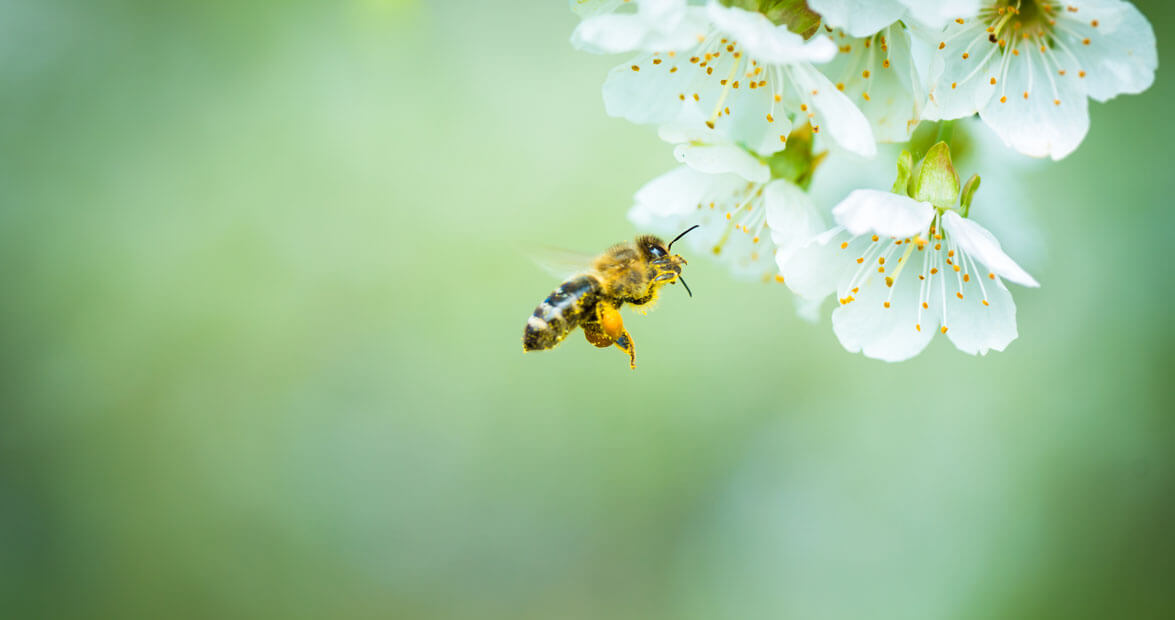 Tips for Planting a Bee-Friendly Garden in NC | Our State ... Native Bee Pollinator Garden Designs on native plant garden, native wildflower garden, native perennial garden, native bee habitat,