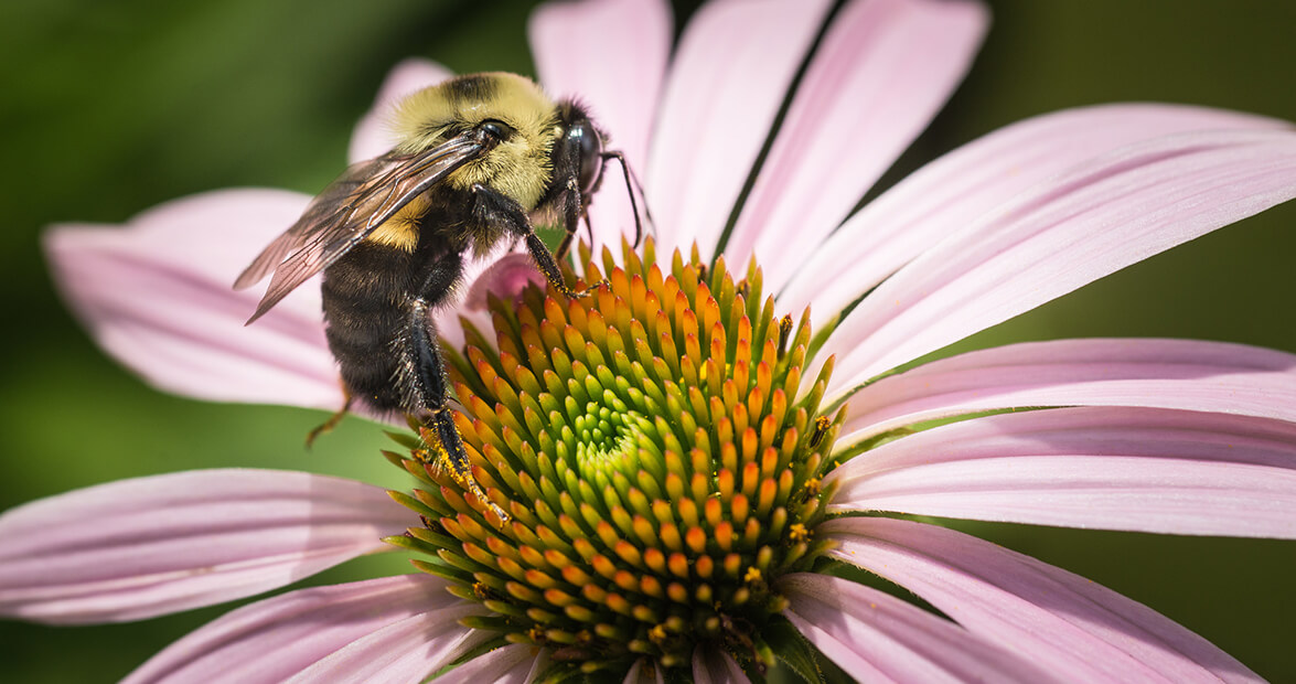 6 Tips for Planting a Bee-Friendly Garden in North Carolina