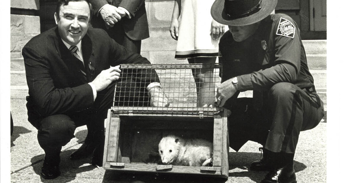 The Pardoning of Slow Poke the Possum