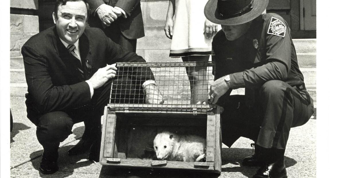 The Pardoning of Slow Poke the Possum
