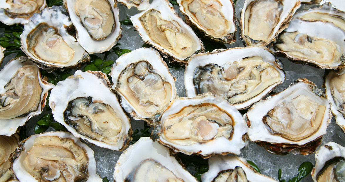 The State of Oysters | Our State
